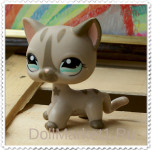 LPS cat shorthair #1206